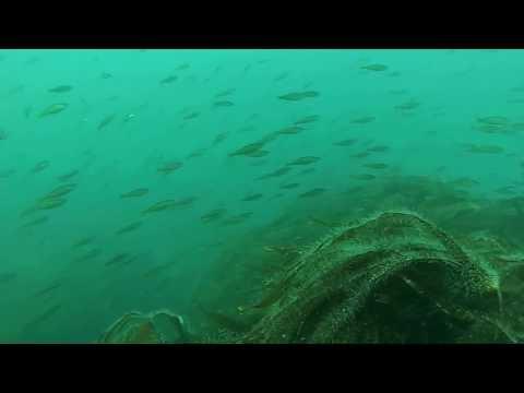 diving at macduff