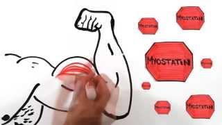 Мышечная масса с научной точки зрения (почему не растут мышцы)(Еще больше на http://vk.com/fizkult_privet Подписывайся мы тебе очень рады!, 2013-06-27T11:10:04.000Z)