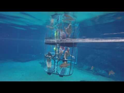 Shark Tank Dive Ushaka