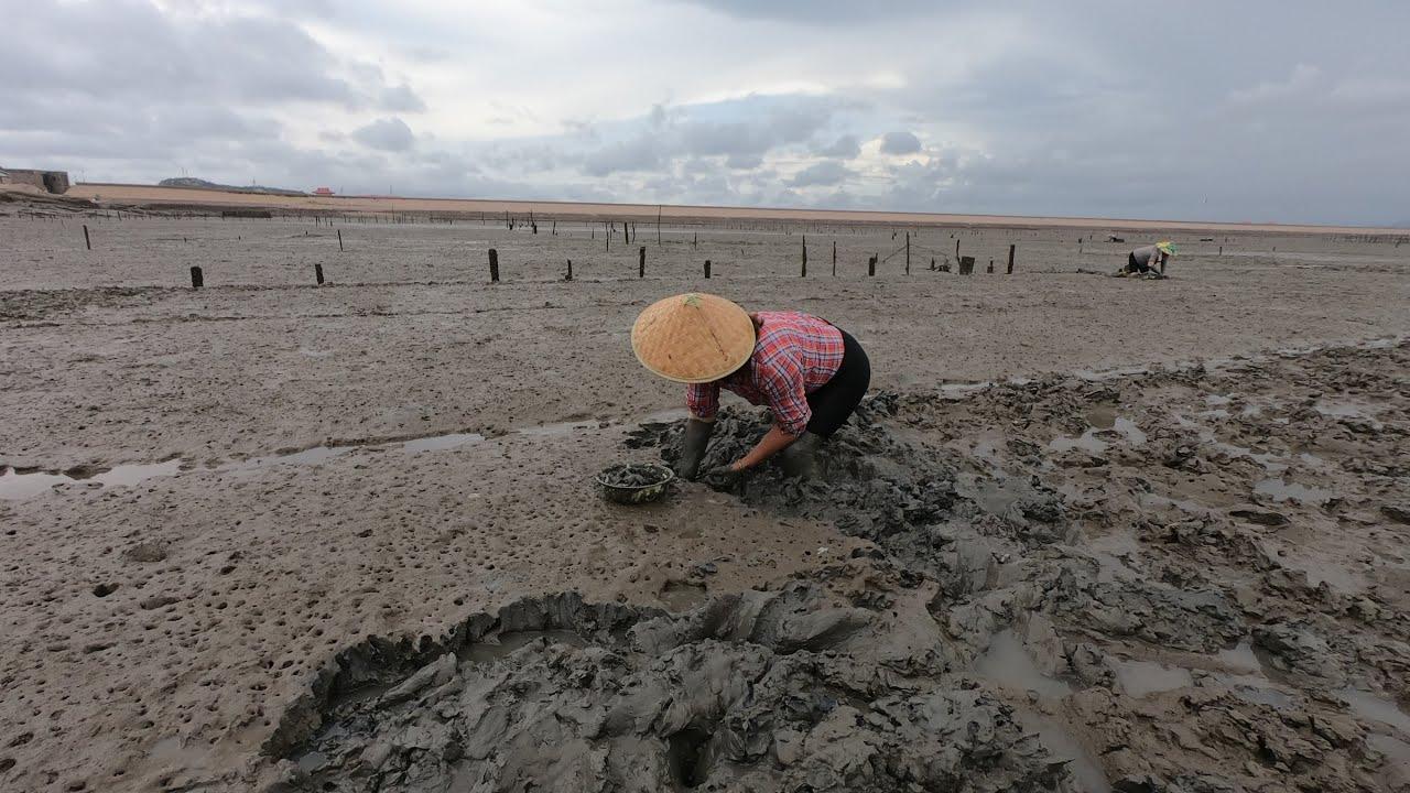 渔妹这里的天然田地从不施肥,海货产量出奇的高,今天抓爆了
