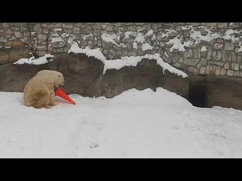 Polar beer enrichment