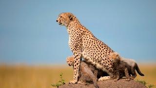 Tusk Photo - Masai Mara Photographic Safari