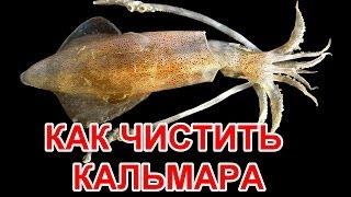Как чистить кальмары