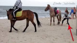 Лошадь на морском курорте. Природа, свежий воздух, красота