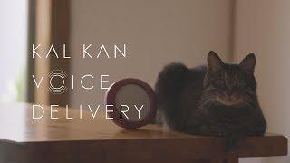 猫は昔いっしょに過ごした飼い主の声を覚えているのか。カルカンの実験