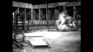 Tigre vs leão no circo - Luta de 1933 (Batalha épica)