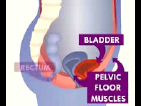 Pelvic Floor Exercises Overactive Bladder Control Problems Youtube