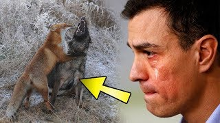 Köpek Her Gün Ormana Kaçıyordu – Sahibi Köpeği Takip Edince Gözyaşlarını Tutamadı.