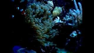 Мой морской аквариум 26,05,2013(, 2013-05-26T13:24:19.000Z)
