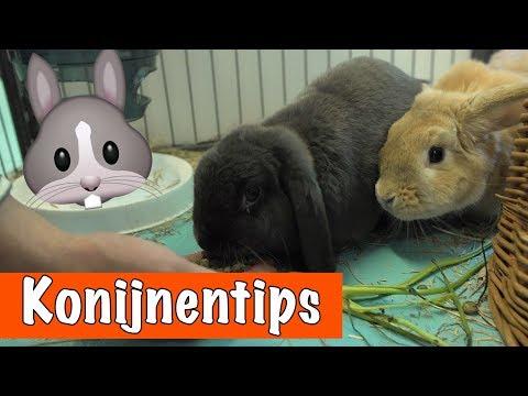 10 tips over KONIJNEN🐰 | DierenpraatTV