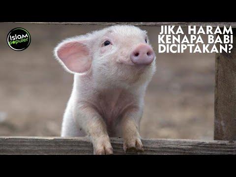 Alasan Ilmiah Ini Bukti Kuat Kenapa Babi Diharamkan