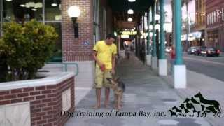 Dog Training of Tampa Bay Accelerated Course