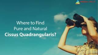 Know the cissus quadrangularis uses to live healthy lifestyle!