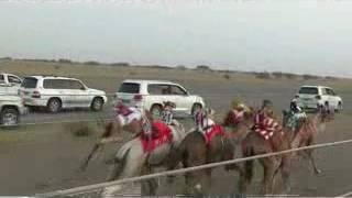 Arab camel race by baloch