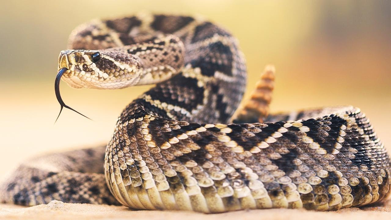 Man Bolts After Confronting Rattlesnake