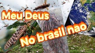 MISERICÓRDIA MEU DEUS CHUVA DE GAFANHOTOS NO BRASIL VAI FALTAR ALIMENTAÇÃO