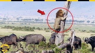 🔴 6 Lần BẠI TRẬN THẢM HẠI Của Chúa Tể Muôn Loài Khi Đi Săn Trong Thế Giới Động Vật