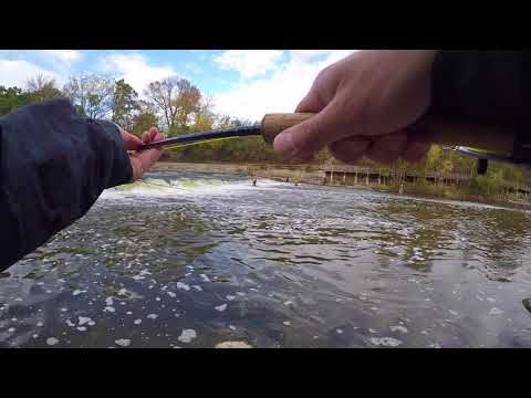 Fly Fishing for King Salmon in the Milwaukee River Fall 2017