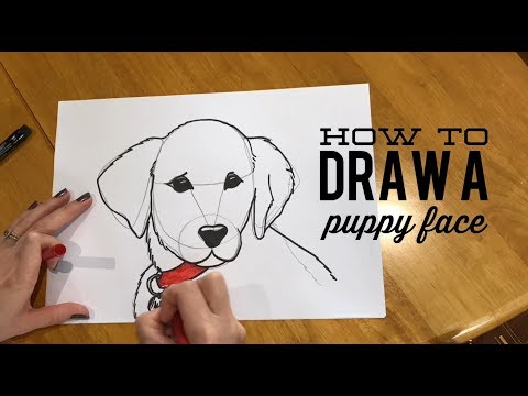 beginners'-lesson---how-to-draw-a-puppy-face