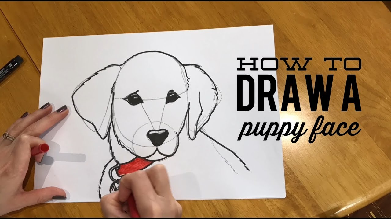 beginners u0027 lesson how to draw a puppy face youtube