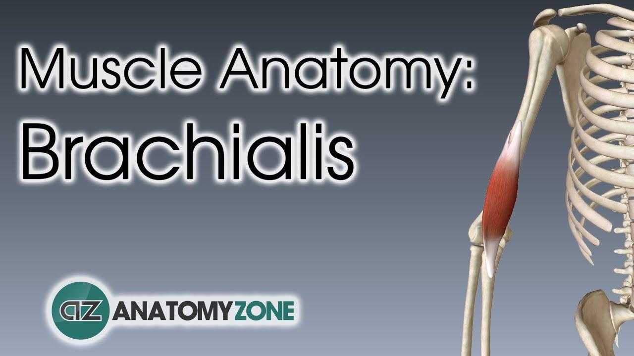 brachialis artrózis kezelés áttekintés