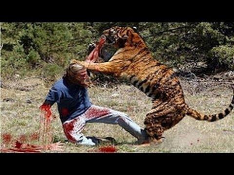 Humor - cuando los animales atacan a los humanos animales salvajes divertidos ataca compilación 2016