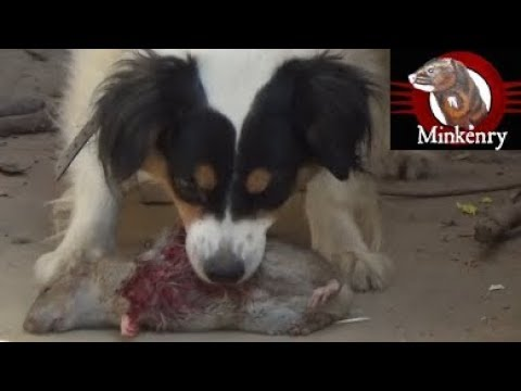 mink-and-dog-cleanup-backyard-rats-part-2
