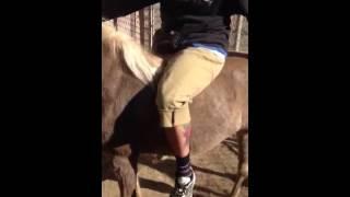 Pony whip