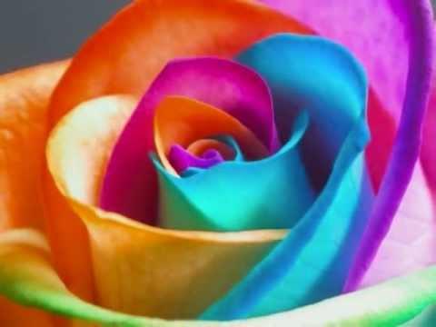 Consegna Fiori Italia.Speedy Flowers Consegna Fiori In Italia E Nel Mondo Speciale San