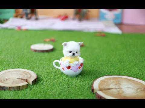 MUST WATCH!! LOOK HOW CUTE THIS MALTESE IS!!! - Teacup Puppy