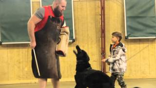 Small Boy, Big Black Dog, Home Protection, Guard, K9, For Sale