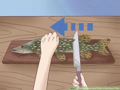 How to Clean and Fillet a Northern Pike