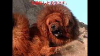 世界一高価な犬の価格と画像をまとめました.