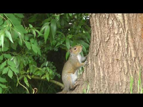 Pest Control with Air Rifles - Squirrel Shooting and Trapping - Last Vid of 2016