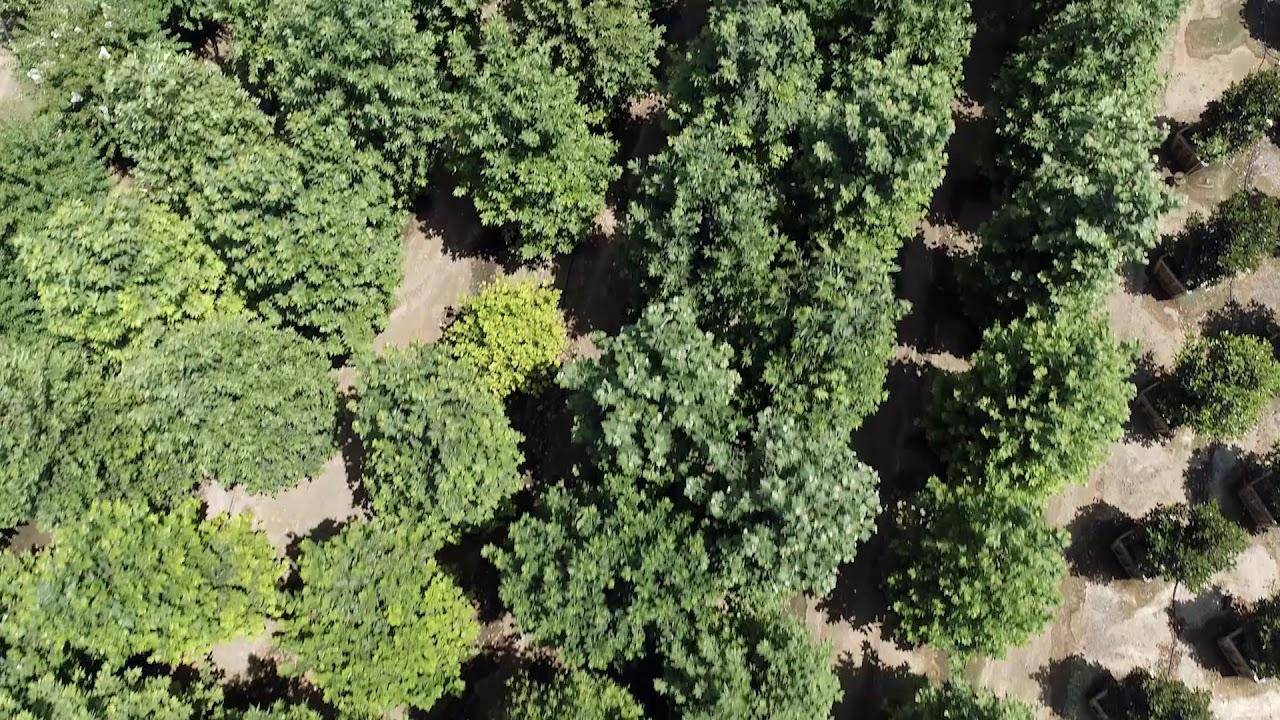 Moon Valley Nurseries Growest Farm