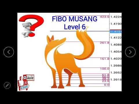 fibo-musang-:-level-entry-6