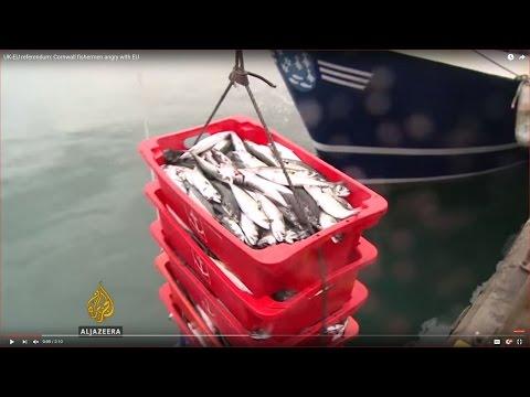 UK-EU referendum: Cornwall fishermen angry with EU