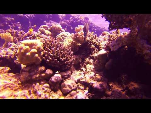 Diving Trip & Snorkeling In Sharam El Sheikh - Egypt - GOPRO FULL HD