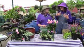 How to Select a Container and Container Gardening Tips