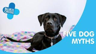 Top 5 dog myths