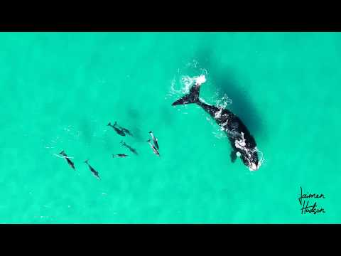 Whales dancing with Dolphins