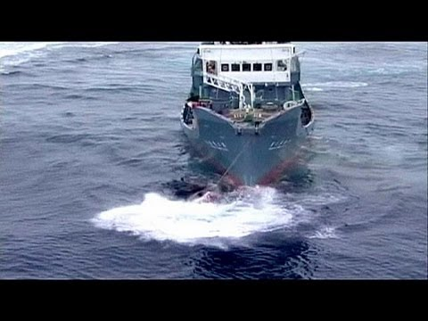 Australia and Japan in court over whaling