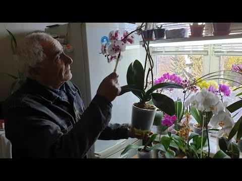 Орхидеи в домашних условиях освещение