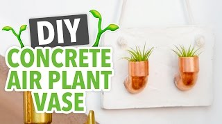 DIY Concrete Air Plant Vase Room Decor - HGTV Handmade
