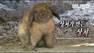 Adorable Rabbit Has Become Paranoid