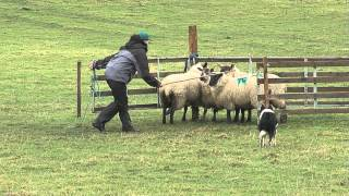 Three Provinces Nursery Trial 2015 Competitor Clips And Presentations