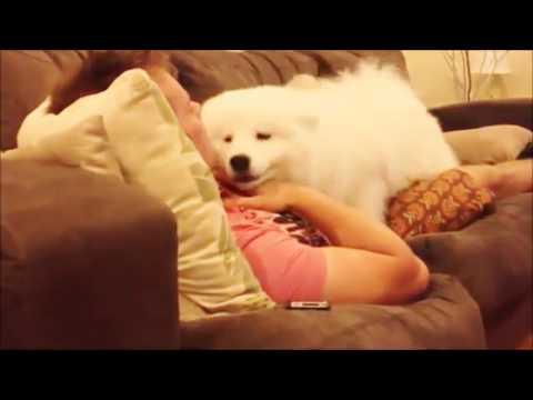 【かわいい犬】ふわふわ白クマみたいな甘えん坊♡