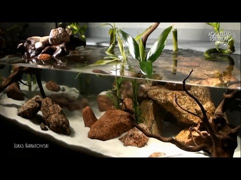 Aquarium Setup/Aqua Terrarium- Bamboo Style (Re-vised Series) - Animalia Kingdom Show