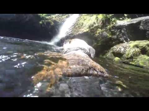 Dog swimming towards waterfall
