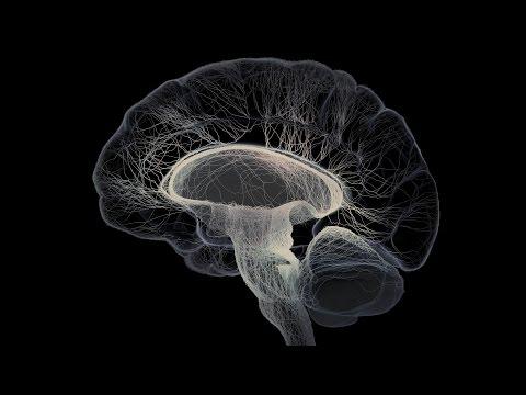 Noam Chomsky - Mapping the Human Brain